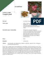 Harpagophytum Devils Claw materia medica herbs