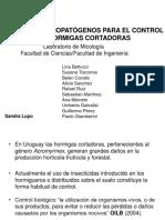 05 Lupo - Hongos Enotmopatógenos en Hormigas Cortadoras