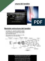 tendon 1