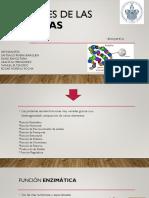 Funciones de Las Proteinas BIOQUIMICA