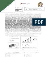 Biologia FT 4 - Síntese proteica e mitose - exerc´cicios de exame