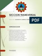 SECCION TRANSVERSAR EN COLUMNAS