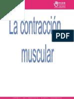 contraccion-muscular.pdf