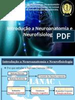 introducion neuro anatomia