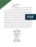 Neuroanatomi Sirkulasi Posterior Otak Referat