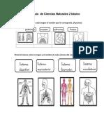 Guía de Ciencias Naturales 2 Básicocuerpo Humano