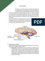 Tronco-encefálico