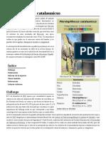 Pierolapithecus_catalaunicus