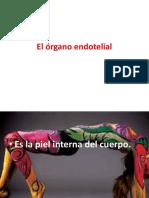 El Órgano Endotelial