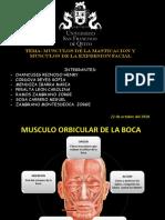 Musculos de La Expresion Facial