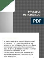 Procesos Metabólicos