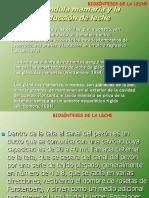 Biosintesis de La Leche 2010