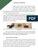 Introdução Aos Arthropoda 2017