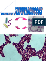 10 Staphylococcus.ppt