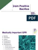 Gram Positive Bacillus