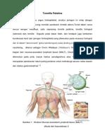 Anatomi Tonsil Fix