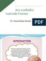 Hemisferios Cerebrales Características