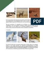 Tipos de Biomas y Sus Animales