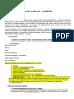 347102055 Informe Celulas Eucariotas