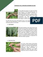 10 Plantas Medicinales de La Región de Madre de Dios