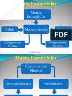 Matriz Extracelular 2018.pdf