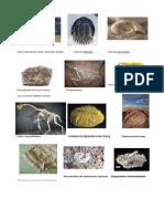 12 Tipos de Fosiles