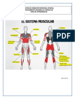 Guia de Aprendizaje Musculos Karen