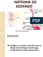 Anatomia Del Esofago 1