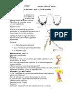 Hueso Hioides y Musculos Del Cuello