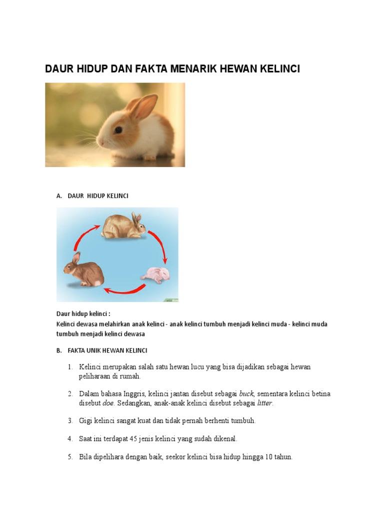 Download 95 Gambar Kelinci Hidup Keren Gratis