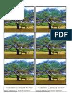 La Deforestación y La Ambición Del Hombre Anidan Un Mismo Lenguaje