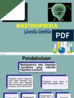 MASTIGOPHORA EDIT.ppt