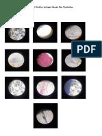 Gambar Struktur Jaringan Hewan Dan Tumbuhan