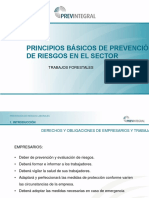 Power Point Model-trabajos Forestales