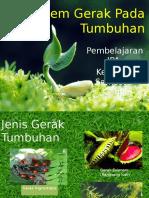 Sistem Gerak Pada Tumbuhan.pptx