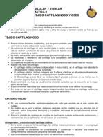 NOTAS_DE_CARTILAGO_Y_HUESO_2010