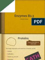 Enzymes b2.3