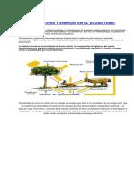 FLUJO DE MATERIA Y ENERGÍA EN EL ECOSISTEMA.docx