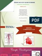 Diapositivas Embriologia Sistema Cardiovascular Completo