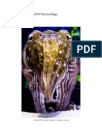 elucidating cuttlefish camouflage
