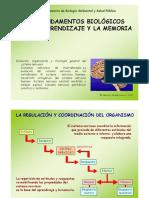 4-SISTEMA NERVIOSO.pdf