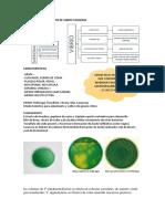 Estudio e Identificacion de Vibrio Cholerae y Leptospira