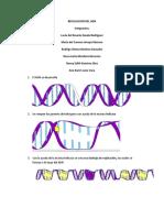 ¿Cómo Se Replica El ADN?