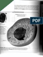 celulas001.pdf