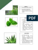 MATERIAL PLANTAS MEDICINALES CHILENAS