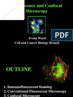 Fluorescence and Confocal Microscopy