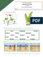 Ficha das Plantas.doc