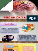 PERCEPCIÓN-Y-AGNOSIAS.pptx