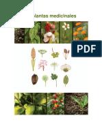 50.Plantas.Medicinales.pdf