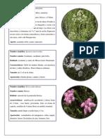 Anexos flora y fauna